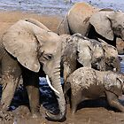 Elephant bath time by Hannah Nicholas