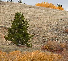 Kenosha Pass Autumn by Robert Meyers-Lussier