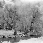 Infrared trees, Mowamba River by Syd Winer