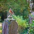 A Robin's Blessings by Cee Neuner