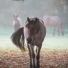 Horses in Autumn by Christopher Cullen
