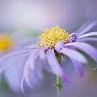Autumn Aster by Jacky Parker