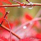 Water Drop by Cee Neuner