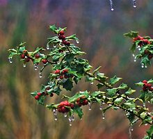 Freezing Holly by Rick  Friedle