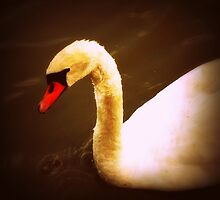 """The Swan"" Colorful Swan photo by JackieJeffries"