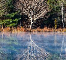 Mirror Mirror on the Pond - Turee Pond - Bow, NH 10-29-13 by David Lipsy