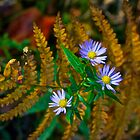 Asters and Ferns by John Butler