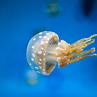 Spotted Jellyfish at Monterey Bay Aquarium by FFRPhoto
