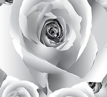 White Roses by TinaGraphics