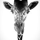 Sticking My Neck Out by Thomas Gehrke