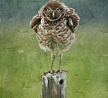 Burrowing Owl by cesstrelle