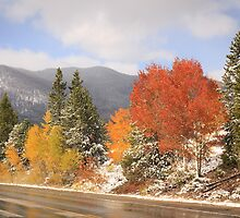 Fall Colors and Evergreens in snow by Gurvinder Singh