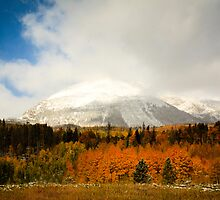 Fall Colors and Evergreens in snow Colorado by Gurvinder Singh