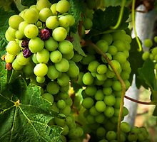 Grapes by Mary Ann Reilly