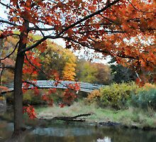Autumn in Illinois by Marija