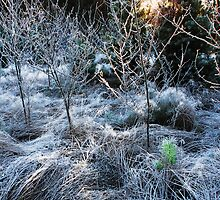 The First Hoar Frost by Imi Koetz
