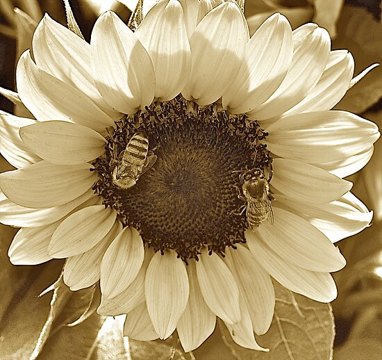 Sunflower and Friends by Cee Neuner