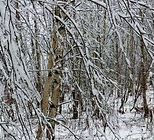 Winter Woods I by Kathleen Daley