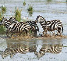 Zebras Crossing by Carole-Anne