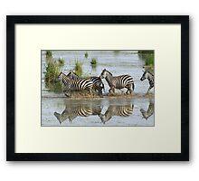Zebras Crossing Framed Print
