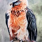 Bearded Vulture WC painting by Heriberto Martinez