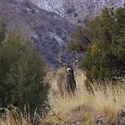 Muley stare down by Tim Harper