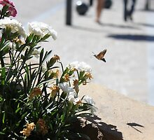 hummingbird hawk moth by Rayvh