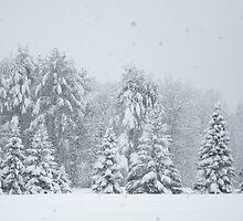 Snowing Heavy - Henniker, NH 01-29-13 by David Lipsy