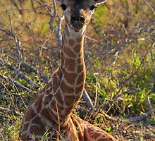 Just born! by Dan MacKenzie
