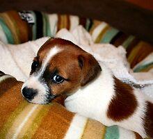 Puppy-dog Eyes by Bami