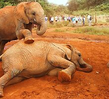 Playtime: Baby Elephants  by Carole-Anne