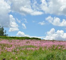 Spring Flowers on Kolob Mountain, Utah  by Crystal Stock
