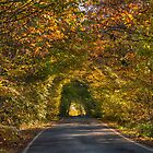 Hicks Forstal Road in autumn by Geoff Carpenter