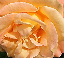 Peachy! by naturelover