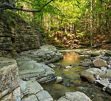 Small mountain stream in the forest by ultramarine-ua
