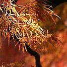 Autumn Fire by kibishipaul