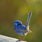 Fairy wren phone case by Jennie  Stock