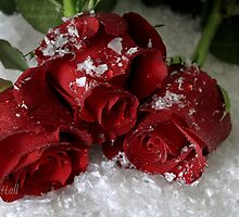 Snow Roses by Tracy777