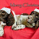 Merry Springers by JEZ22