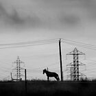 Monty and the Pylons by Bruce  Watson