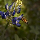 Bee in Her Blue Bonnet by Colleen Drew