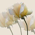 Pale Yellow by Rosalie Scanlon