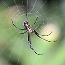 The Orchard Spider by ©Dawne M. Dunton