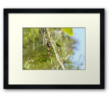 Web Cleaning Framed Print