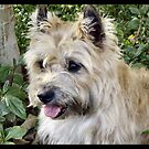 Bright Eyed Cairn by Keala