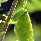 The Green Grasshopper by ©Dawne M. Dunton