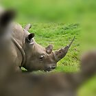 Sharp Rhino Horn - Look Out! by Keith Richardson