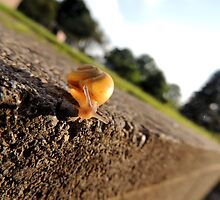 Oh Hai Mr. Snail by SaphiraWolf