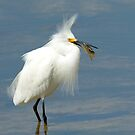 Snowy Egret with a Snack by Heather Pickard
