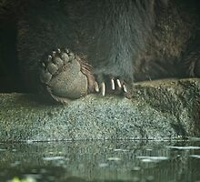 Bear Feet by Dana Horne